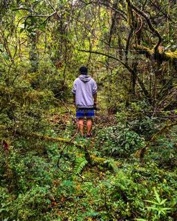 緑豊かな森の上に立つ男の写真・画像素材[2270505]