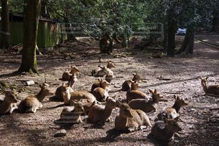 土の上に立つ動物の群れの写真・画像素材[2270511]