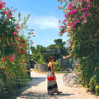木の隣に歩道を歩く女性の写真・画像素材[815887]