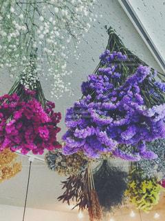 植物の紫色の花の写真・画像素材[1176825]