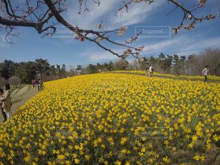 黄色の写真・画像素材[448648]