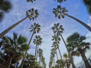 ヤシの木の写真・画像素材[802603]