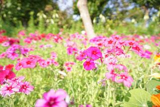 花の写真・画像素材[1093449]
