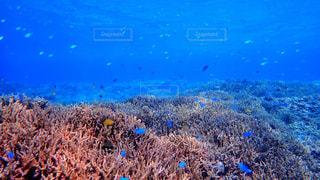 サンゴ、水の写真・画像素材[1130401]
