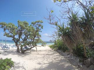ビーチでヤシの木のグループ - No.1139321