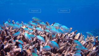 サンゴの水中ビューの写真・画像素材[1139355]