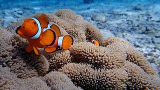 テディベア グッズ サンゴの隣に座ってのグループの写真・画像素材[1139362]