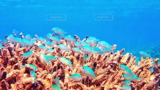 サンゴの水中ビューの写真・画像素材[1240823]