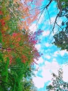 近くの木のアップの写真・画像素材[1610726]