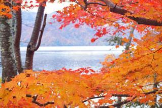 近くにオレンジの木のアップの写真・画像素材[1610733]