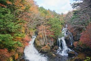 森の中の大きな滝の写真・画像素材[1610734]