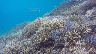 サンゴの水中眺めの写真・画像素材[3493805]