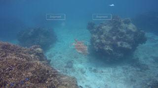 海の中を泳ぐウミガメの写真・画像素材[3493854]