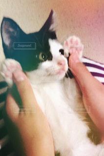 猫の写真・画像素材[685061]