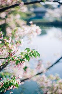 春の写真・画像素材[440207]