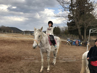 馬の写真・画像素材[472273]