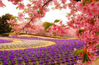 桜 - No.440383