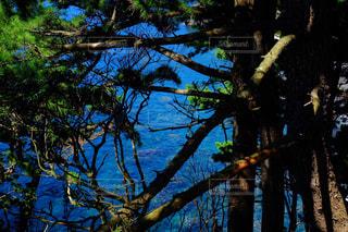 海の写真・画像素材[440505]