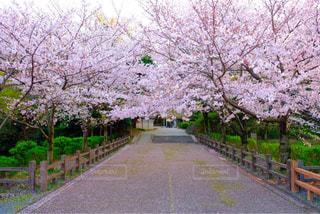 春の写真・画像素材[440517]