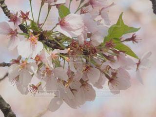 自然の写真・画像素材[440597]