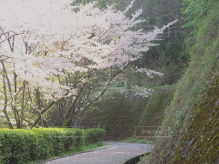 自然の写真・画像素材[440598]