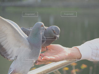 自然の写真・画像素材[440599]