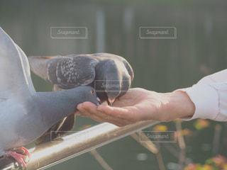 自然の写真・画像素材[440601]