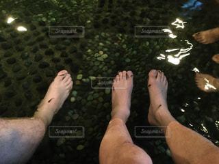 魚の写真・画像素材[441096]