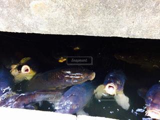 魚 - No.461682