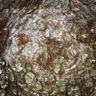 近くの木のアップの写真・画像素材[722841]