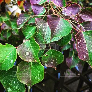 雨雫の写真・画像素材[853838]
