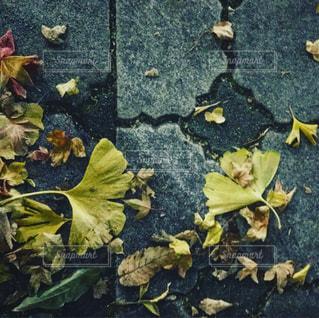 近くの花のアップの写真・画像素材[924152]