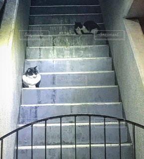 猫の写真・画像素材[983299]