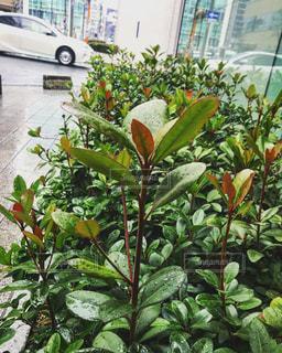 近くの植物のアップの写真・画像素材[1002968]