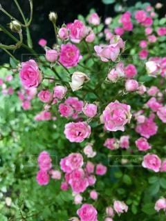 近くの花のアップの写真・画像素材[1278583]