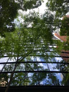 木の上に飛んでいる飛行機の写真・画像素材[1278597]