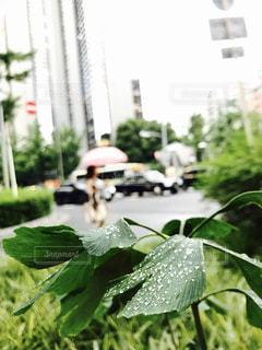 近くのフラワー ガーデンの写真・画像素材[1279362]