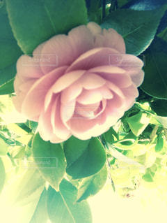 近くの花のアップの写真・画像素材[1280128]