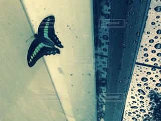 蝶々の写真・画像素材[1280134]