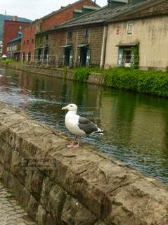 水の体の横に鳥立っての写真・画像素材[1280223]
