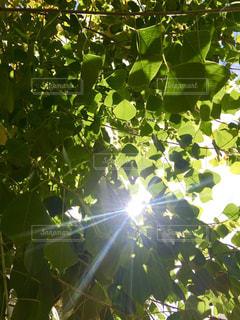 近くの木のアップの写真・画像素材[1280243]
