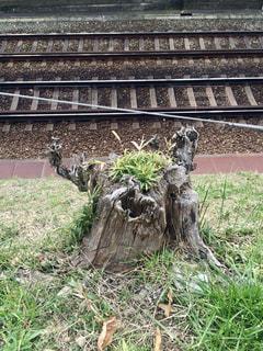 草の中に座っている木製のベンチの写真・画像素材[1280244]