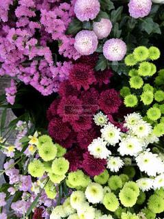 近くの花のアップの写真・画像素材[1287239]