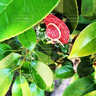 近くの緑の植物をの写真・画像素材[1294933]