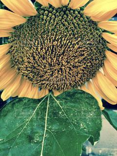 近くの花のアップの写真・画像素材[1294944]