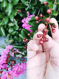 花を持っている手の写真・画像素材[1300835]