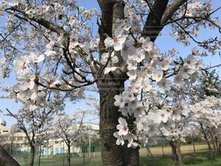 春 - No.441049
