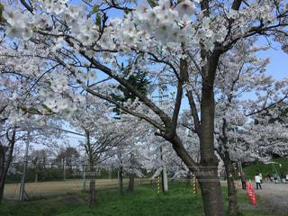 春の写真・画像素材[441050]