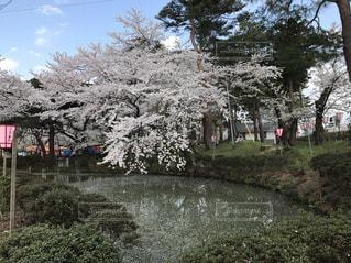 春 - No.441051