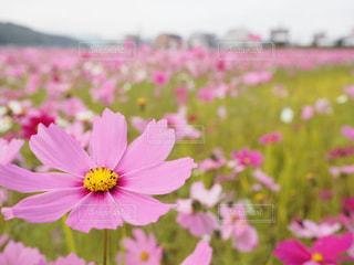花畑 - No.441129
